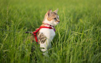 Guinzagli per gatti